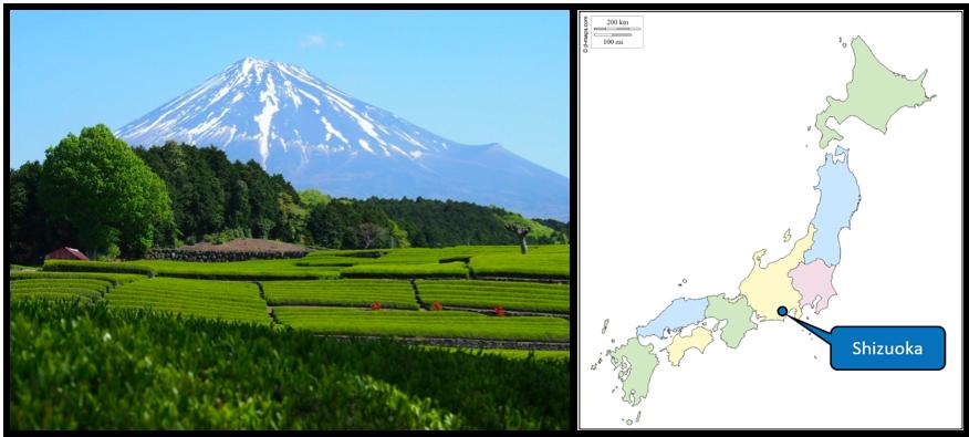 Shizuoka tea plantation.png